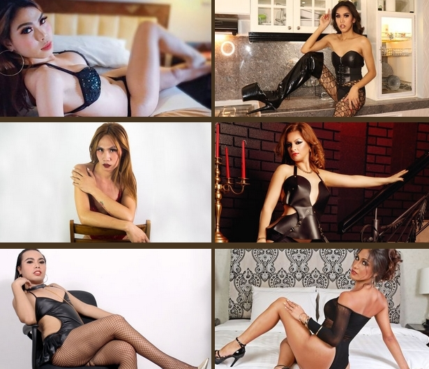 online tranny cams list example